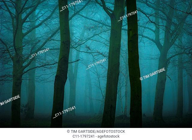 trees in mist,kent,england,uk,europe