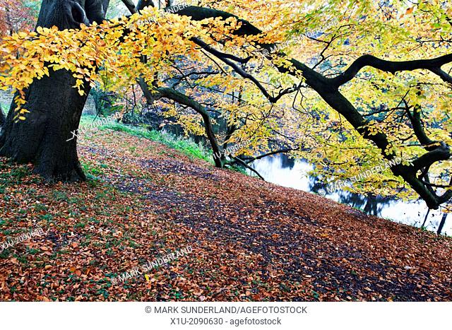 Autumn Trees by the River Nidd at Knaresborough North Yorkshire England