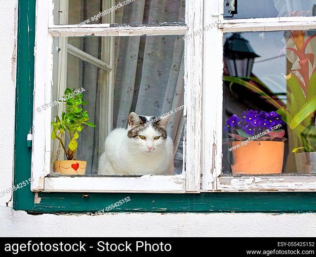 cat, window, flower pot