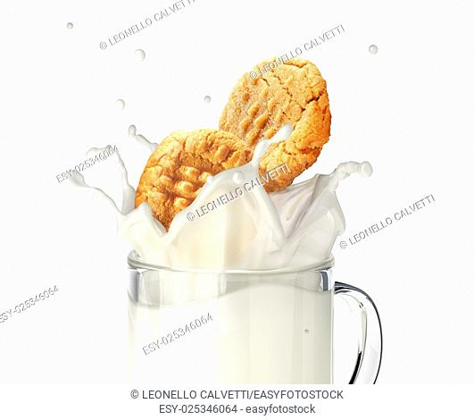 Two cookies biscuits falling into a glass mug full of fresh milk, splashing. close up view, On white background, with clipping path included