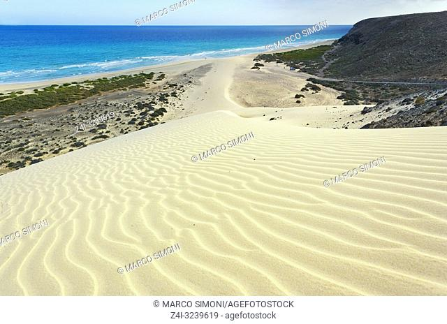 Sandy dunes at Sotavento Beach, Jandia Peninsula, Fuerteventura, Canary Islands, Spain