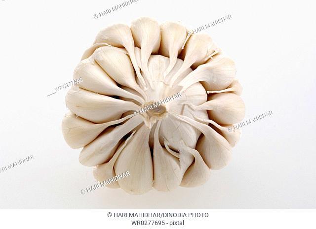 Spices , Garlic Allium sativum on white background