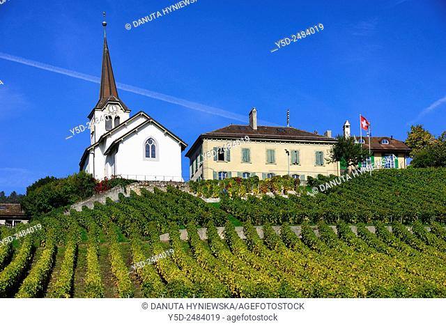 Europe, Switzerland, Canton Vaud, church in Fechy surrounded by vineyards