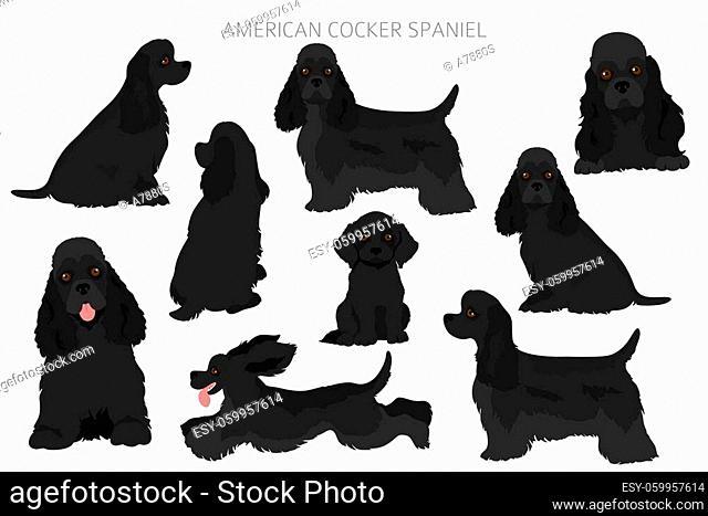 American cocker spaniel all colours clipart. Different coat colors set. Vector illustration