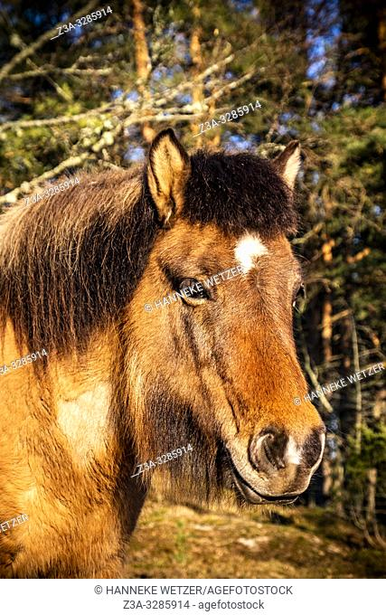 Horse in the forest in Sweden