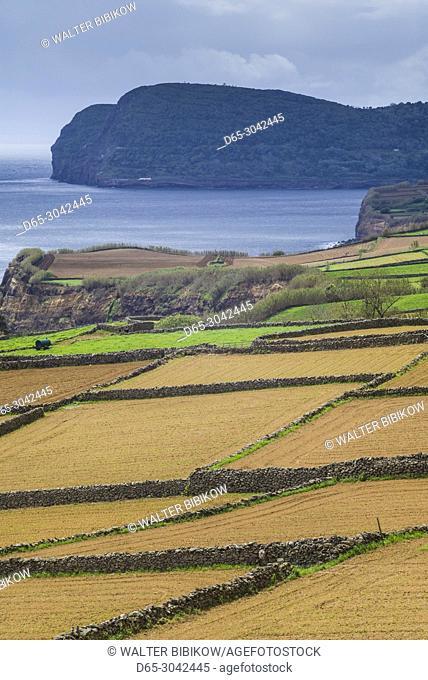 Portugal, Azores, Terceira Island, Santo Amaro, seaside fields, springtime