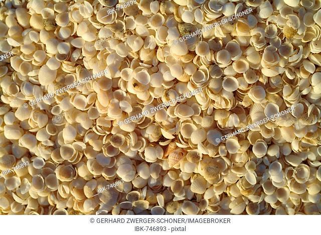 White seashells, Shell Beach, Western Australia, Australia