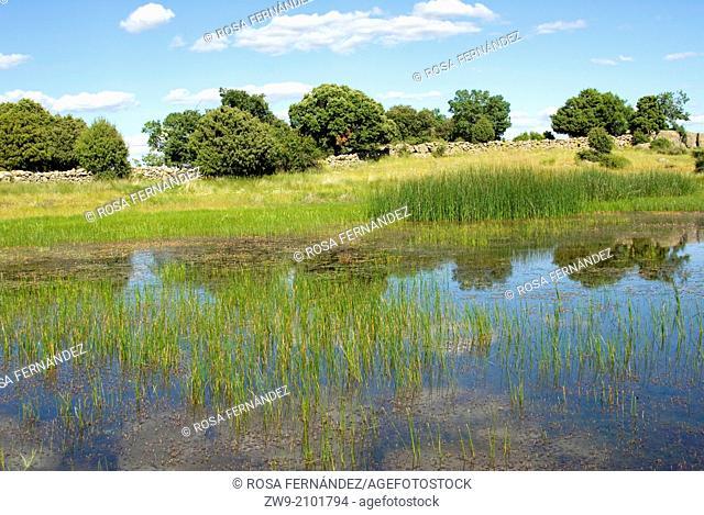 El Castrejon endorheic lagoons, a permanent wet area of great natural interest near Zarzalejo, Guadarrama Mountains, province of Madrid, Spain