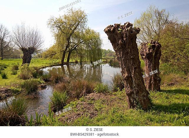 floodplain landscape of the Erft with pollarded willow in spring, museum island Hombroich, Germany, North Rhine-Westphalia, Lower Rhine, Neuss