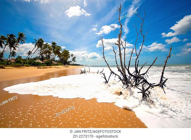 beautiful sandy beach and palmtrees at Tangalle, Sri Lanka
