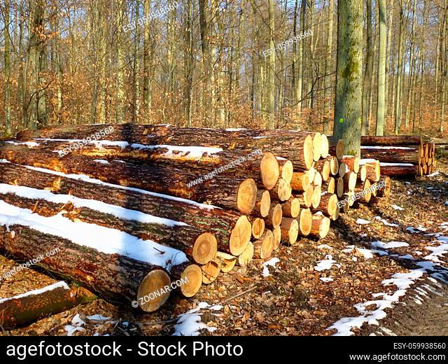 Holzlager im Winterwald mit Schnee, Schneerest auf Baumstämme