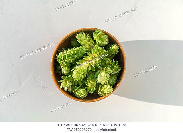 Hops in wooden bowl on grey concrete background. Close up of fresh seed cones from the hop plant, Humulus lupulus. Top view