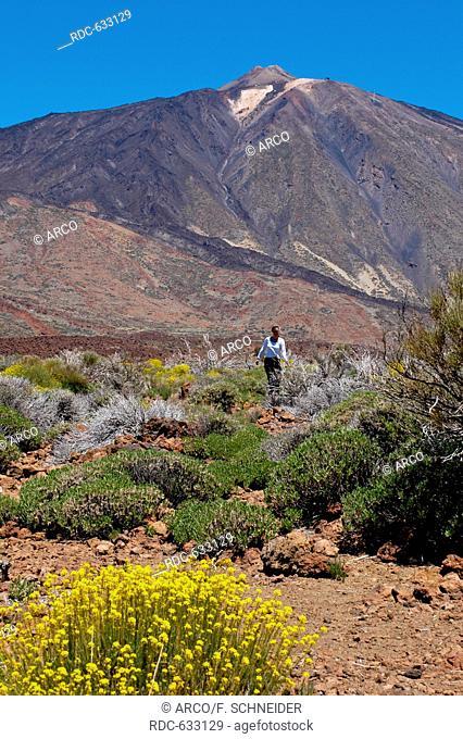 Teide high plateau, Tenerife, Spain, Canary Islands, Europe