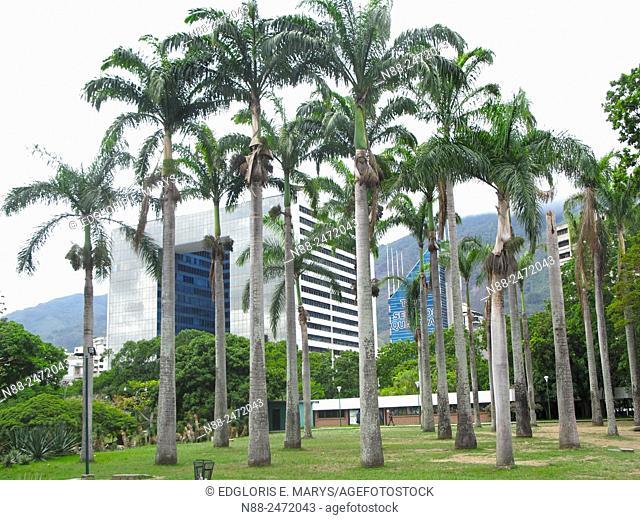 Parque Cristal building view with palms, Parque del Este, Caracas, Venezuela