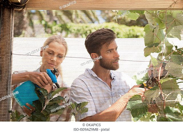 Mature couple in garden, tending to growing plants