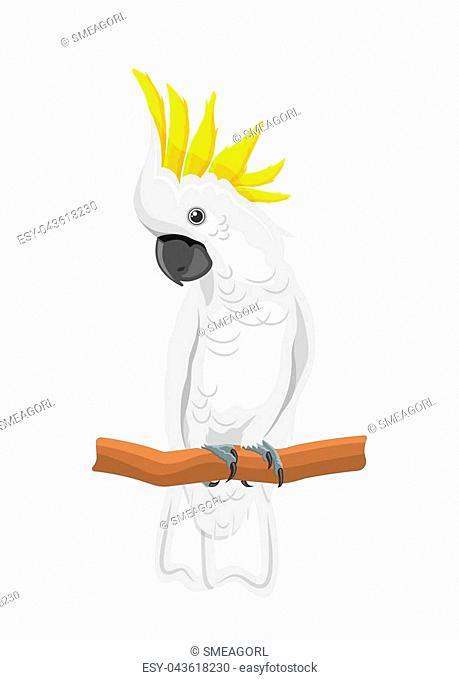 White Cockatoo Parrot On Branch, Exotic Bird with Crest Isolated on White Background - Illustration Vector