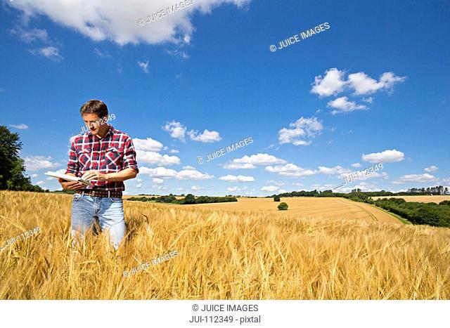 Farmer using digital tablet in sunny rural barley crop field in summer