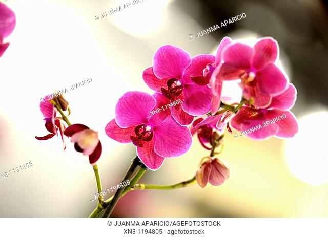 Orchids with blurred background