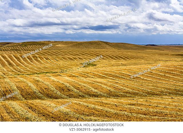 Rolling foothills of Central California following spring rain on mown hay