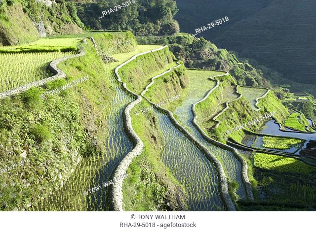 Banaue mud-walled rice terraces of Ifugao culture, UNESCO World Heritage Site, Cordillera, Luzon, Philippines, Southeast Asia, Asia