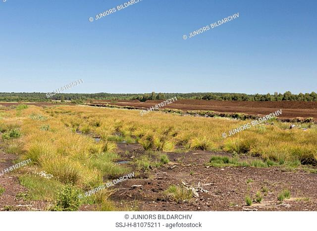 Peat extraction at Totes Moor. Lower Saxony, Germany