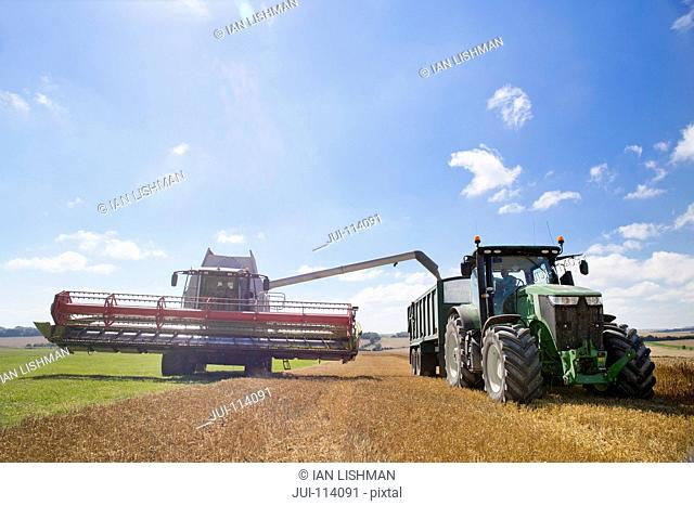 Combine Harvester Filling Trailer With Wheat