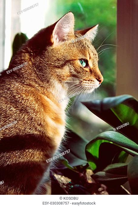 Beautiful domestic cat is sitting on a windowstool outside, close-up portrait