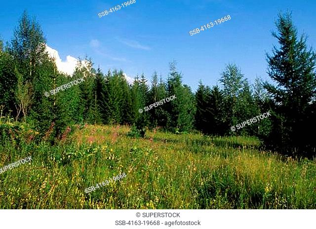 RUSSIA, SIBERIA, YENISEY RIVER, LEBED, NATURE PRESERVE, TAIGA FOREST
