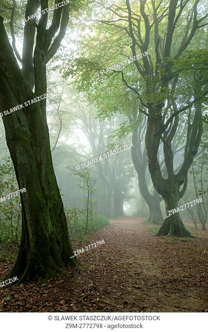 Misty autumn morning in Stanmer Park near Brighton, East Sussex, England. South Downs National Park