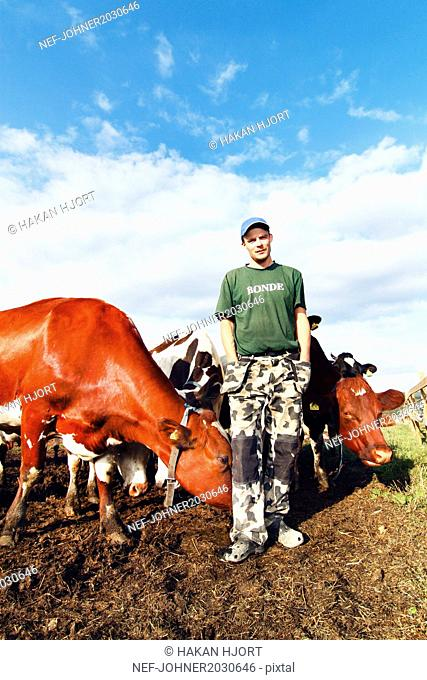 Man with cows on pasture