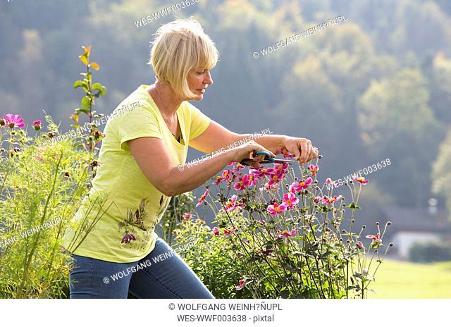 Austria, Mondsee, woman pruning plant in her garden