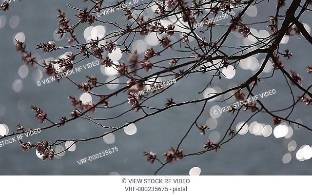 video of branch