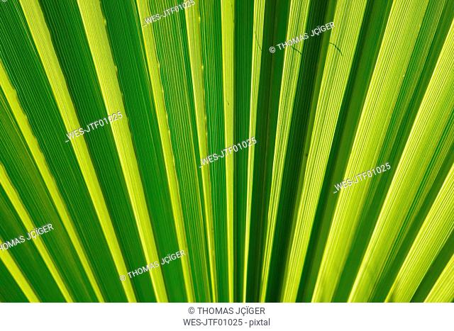 Close-up of palm leave