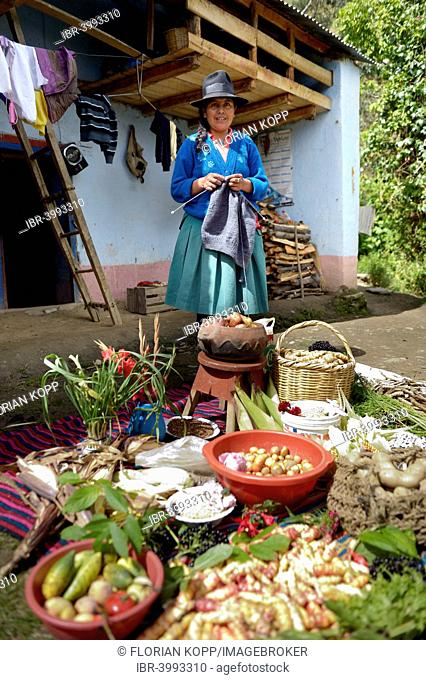 Farmer in traditional costume standing behind produce, knitting, Chuquis, Huanuco Province, Peru