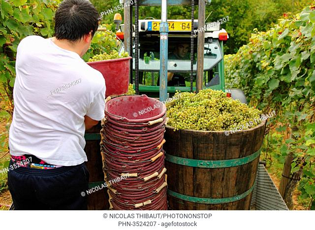 France, Aquitaine, Pyrenees Atlantiques, region of Bearn, Gan, Jurancon vineyard