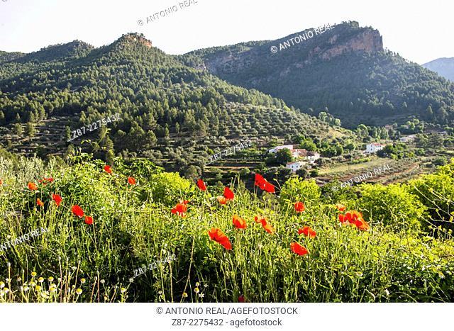 Cuerda de La Melera microreserve, Sierra del Segura, Yeste, Albacete province, Castilla-La Mancha, Spain