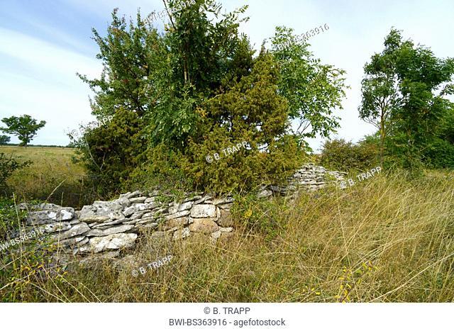 overgrown pile of stones on Gotland in Sweden, Sweden, Gotland