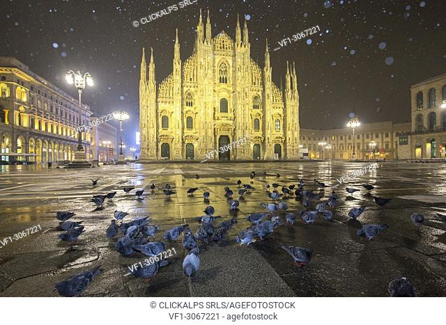 Pigeons in Piazza Duomo during a night snowfall. Milan, Lombardy, Northern Italy, Italy