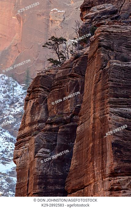 Zion Canyon walls in winter, Zion National Park, Utah, USA