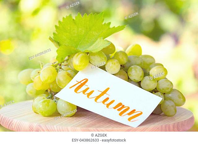 bunch of grapes - autumn still life with inscription autumn