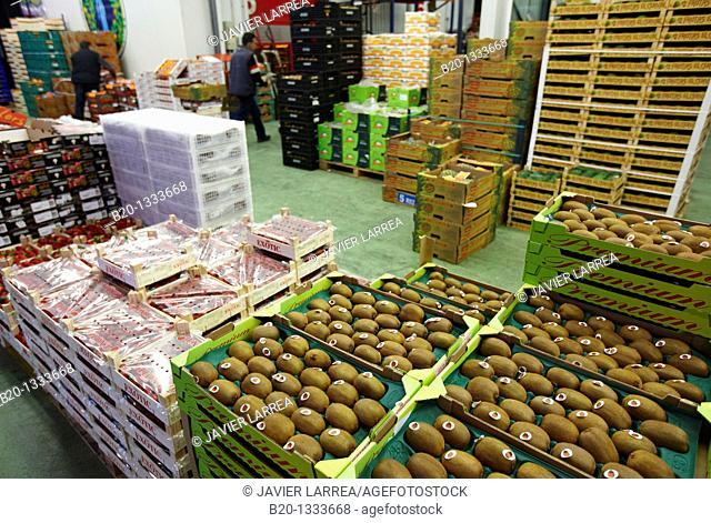 Kiwis, Mercabilbao fruits and vegetables wholesale market, Basauri, Bilbao, Bizkaia, Euskadi, Spain