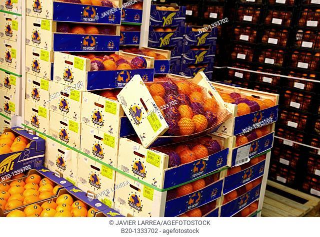 Oranges, Mercabilbao fruits and vegetables wholesale market, Basauri, Bilbao, Bizkaia, Euskadi, Spain