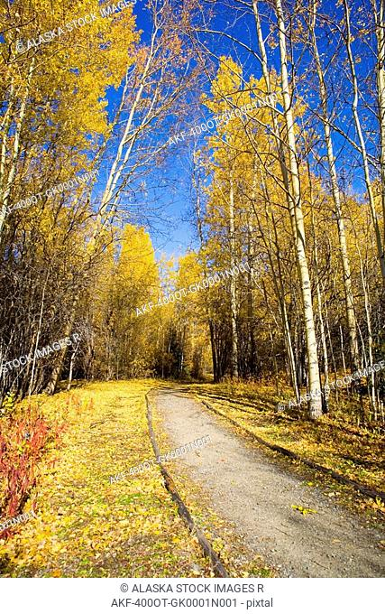 Foot trail leads into the forest near Haines Junction. Fall in the Yukon Territory, Canada