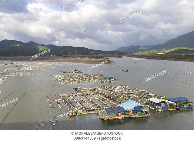 Chine, Chine du Sud, Province de Fujiang, Région de Xiapu, Ferme à poissons, / China, Fujiang Province, Xiapu County, Fish farm