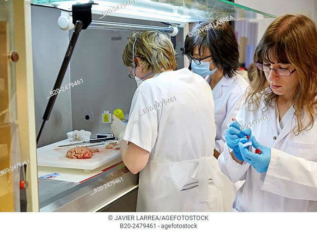 Selecting brain tissue sample, Anatomic Pathology, Hospital Donostia, San Sebastian, Gipuzkoa, Basque Country, Spain