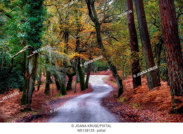 New Forest, Lyndhurst, Bolderwood, Hampshire, England, UK