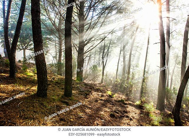 Winter forest scenery with rays of warm light at sunrise, Riomalo de Abajo, Hurdes, Caceres, Spain