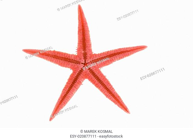 red starfishs on a white background