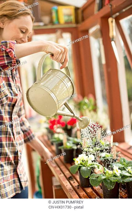 Woman with watering can watering potted plants in greenhouse