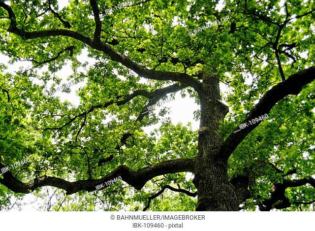 Broad-Leafed tree